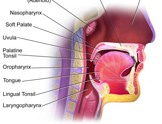 Blausen_0861_TonsilsThroat_Anatomy2
